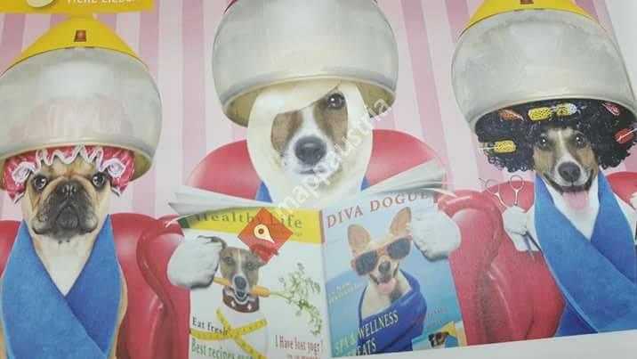 Hundefellstudio Zirl
